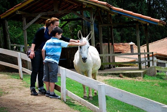 criança fazendo carinho do cavalo
