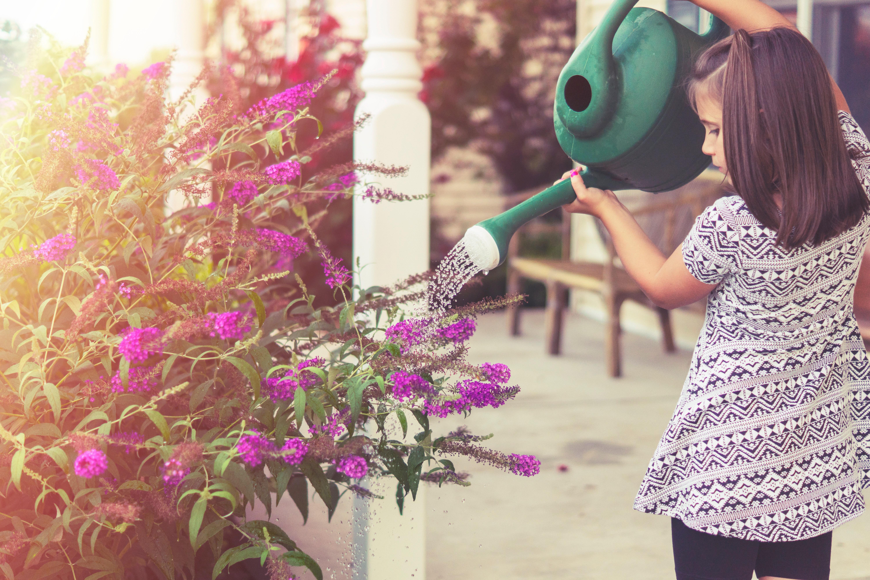 criança regando uma planta rosa com um regador verde