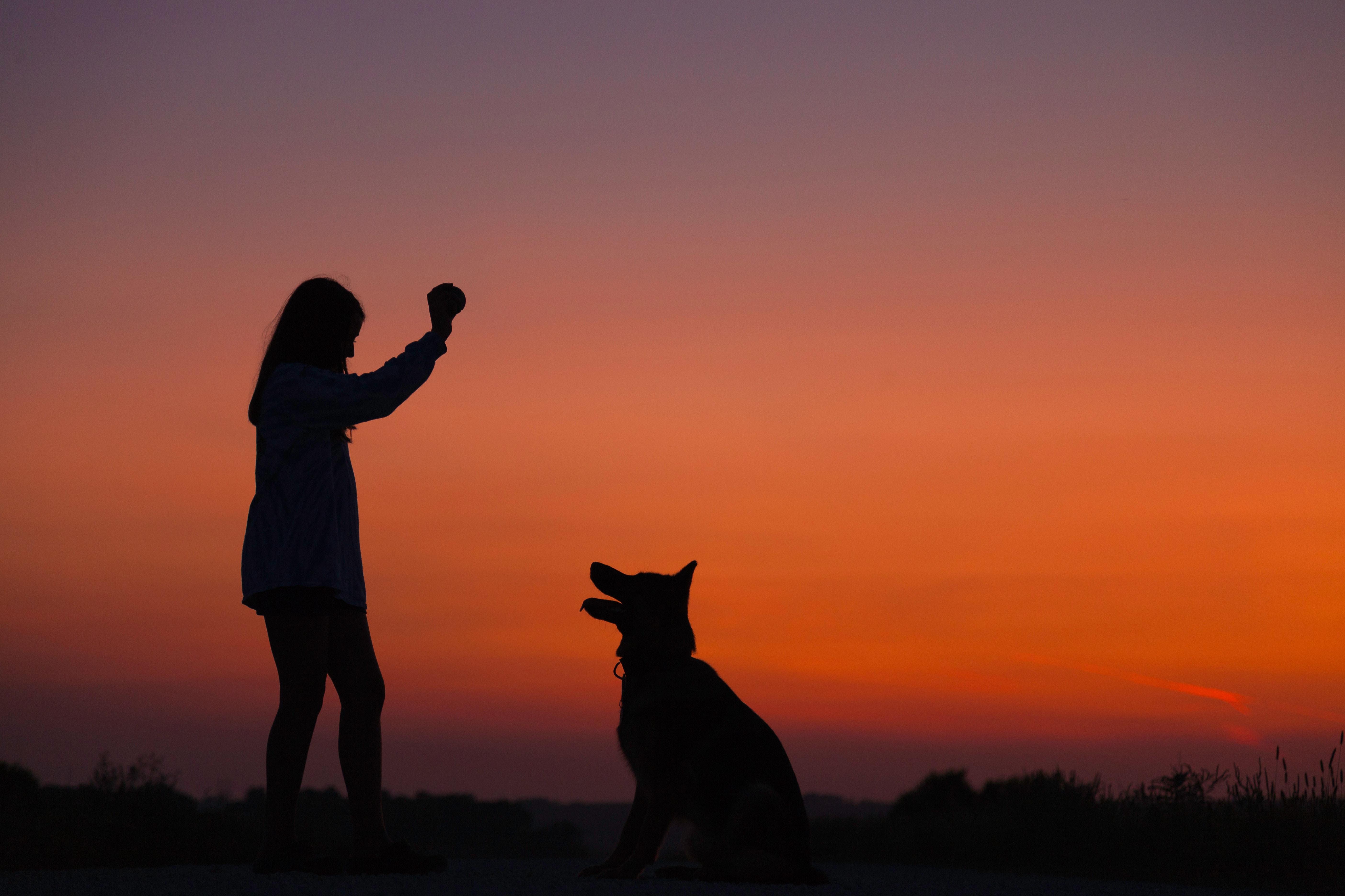 criança brincando com cachorro no por do sol