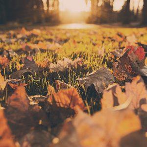 folhas caídas no chão com um sol de fundo